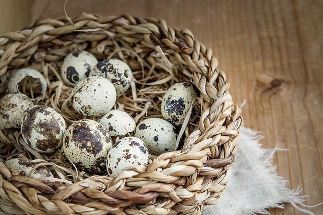 Cura cu oua de prepelita